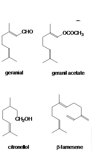 Beberapa Jenis Kommponen Kimia dalam Minyak Atsiri